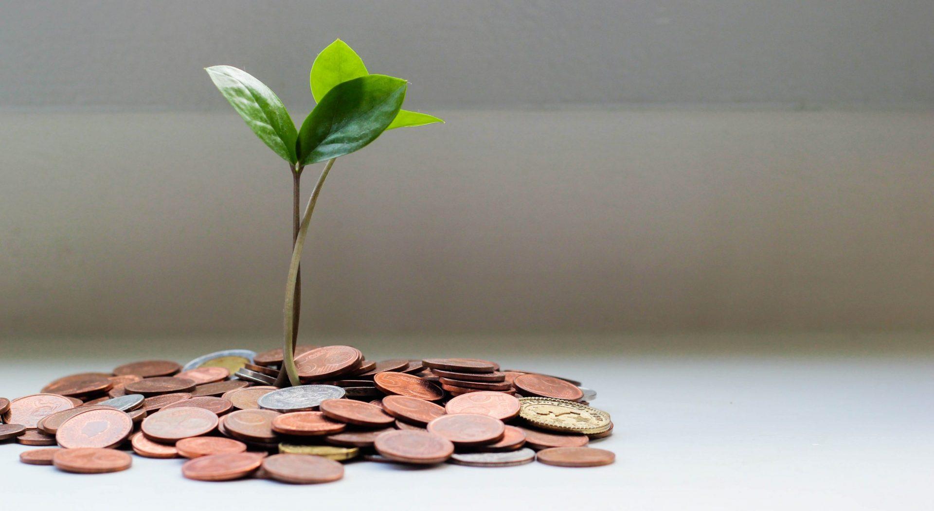 Hakukonenäkyvyys on kannattava investointi